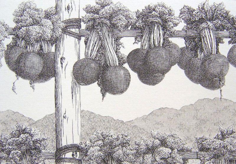 Ryohei - Sugar Beets - 3.25 x 4.75